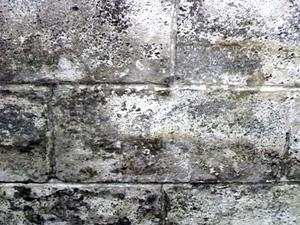 Mold on cinder-block before DRS
